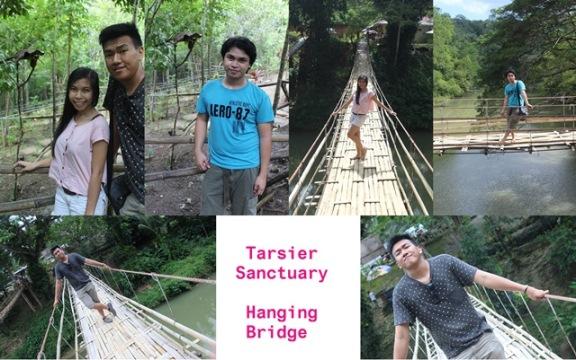 K Tarier Sanctuary